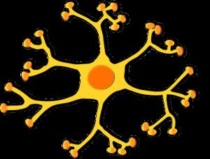 BDNF protein brain molecule