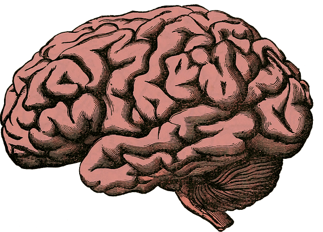 Oroxylin A and its effects on the brain