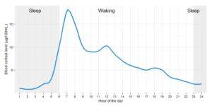 daily cortisol rhythm chart